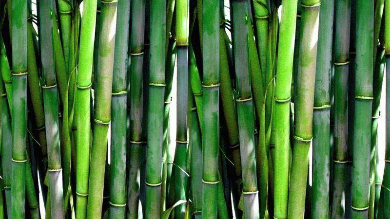 DENR orders bamboo planting along Cagayan River
