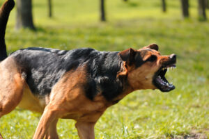 4 Things To Know About Dog Bite Lawsuits